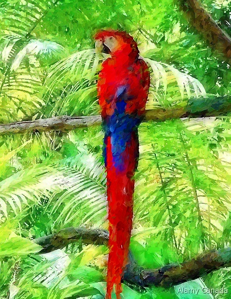 Parrot in oil canvas artwork